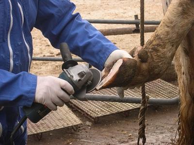 Les fiches techniques des risques professionnels des élevages bovins